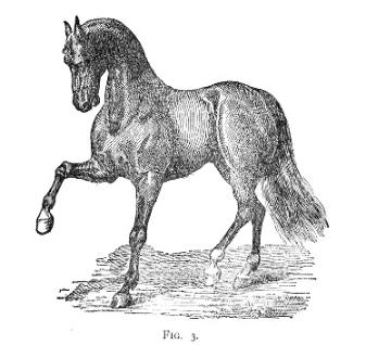 Horse Fig 3