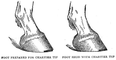 How to Shoe a Kicking Horse or Trotter: Modern Blacksmithing 1901